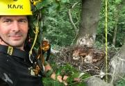 Vorsichtig dem Horst und den Jungvögeln nähern. © pixeldiversity