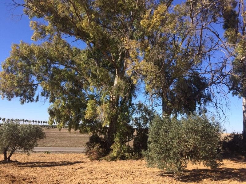 Totfund. Greta wird in der Nähe von Sevilla aufgefunden. © José Ramón Izaguirre